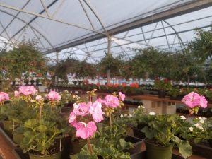 Plant Nursery Olympia Scatter creek