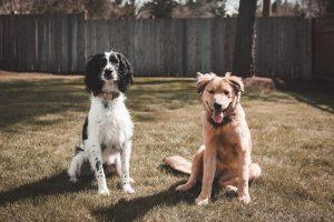 Venables-pest-managment-dogs