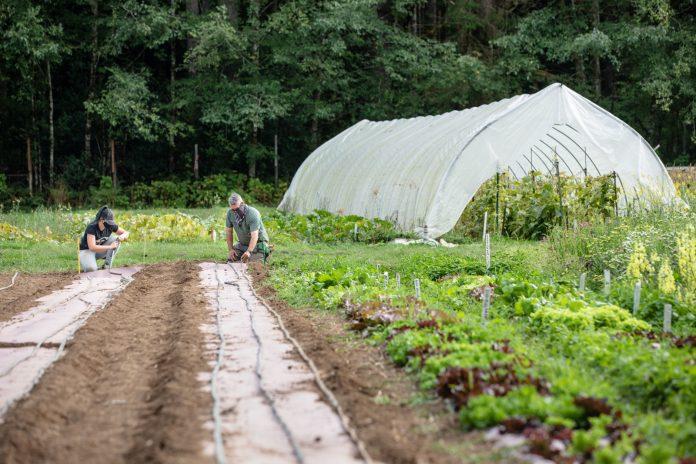 Evergreen-Organic-Farm-Planting