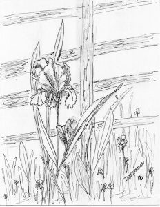 Lorraine-Donner free coloring pages Iris