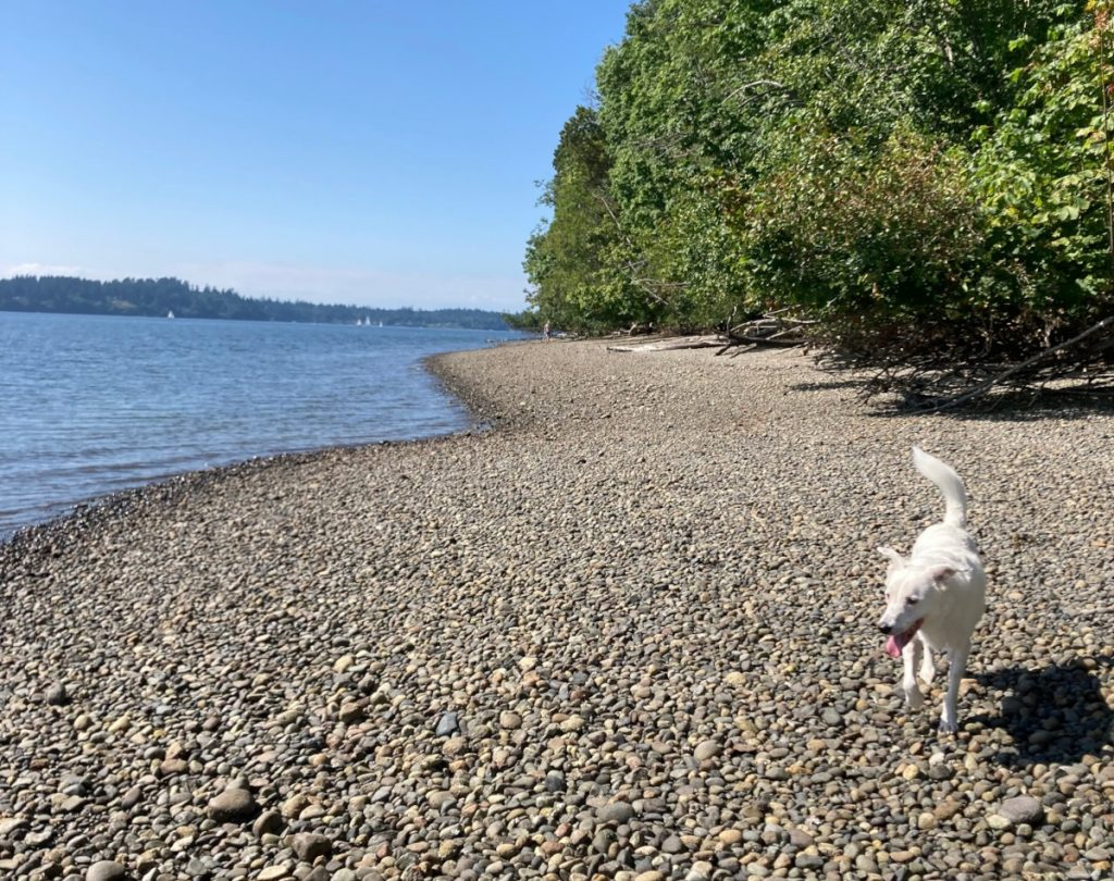 Olympia Waterfront-Trails-Priest-Point