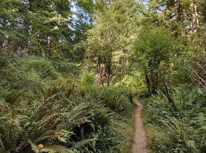 Thurston County Walk Grass-Lake-Nature-Trail-Olympia-Washington
