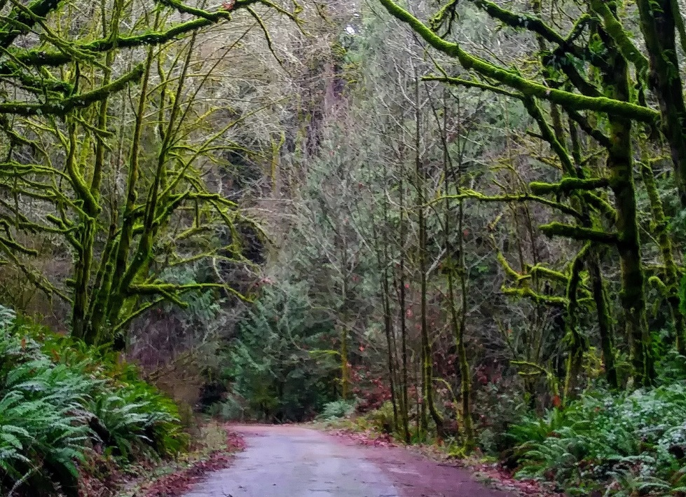 Thurston-County-Walk-Woodard-Bay-Natural-Resources-Conservation-Area-hiking