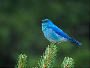 Washington's Birds by Habitat @ via Zoom